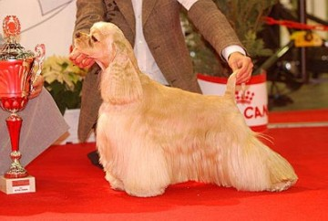 8-paris-dog-show-2011.jpg