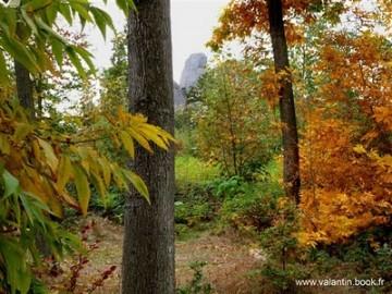 Voeux 2011 Bois de Vincennes.jpg